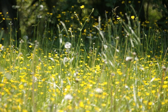 IAM issues tips for driving with hay fever